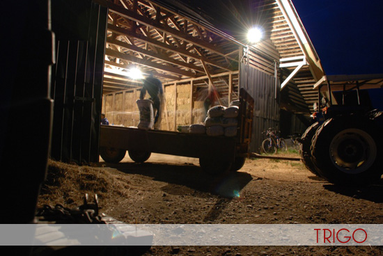 Estás viendo: Southern Zone Farms